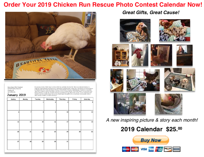 Chicken Run Rescue calendar. Click to order