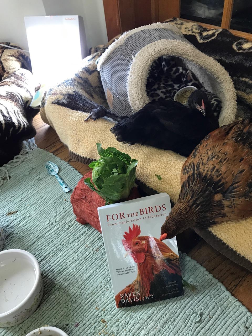 2019 Chicken Run Rescue Photo Contest: For the Birds! - 28