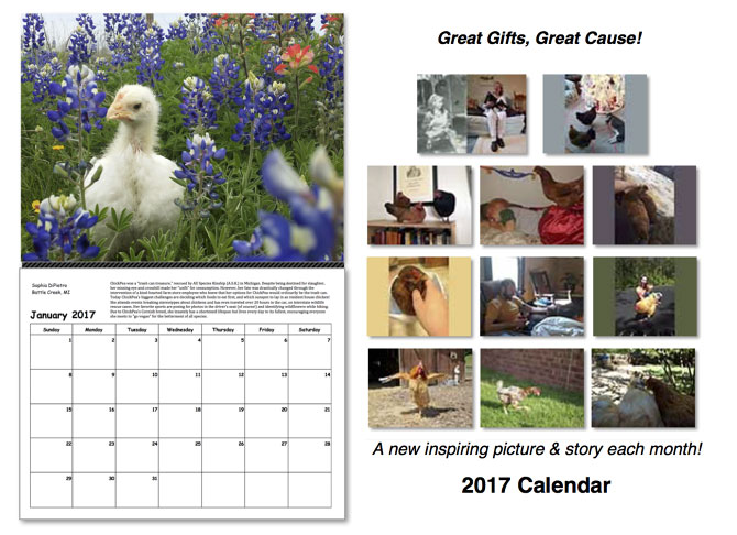 Chicken Run Rescue 2017 calendar