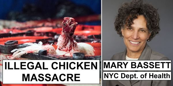 Chicken covered in blood and Mary Bassett