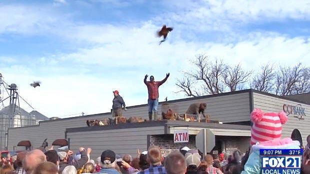 Googlier madison search date 20180217 chicken being tossed from the roof of a building into a crowd of people fandeluxe Image collections
