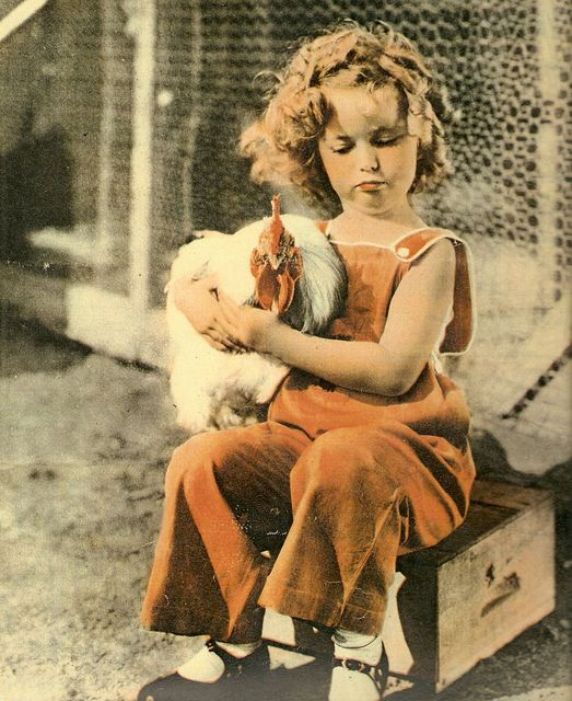 Shirley Temple sitting on a wooden box and holding a rooster