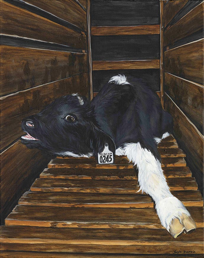 Painting of a calf in a dairy crate