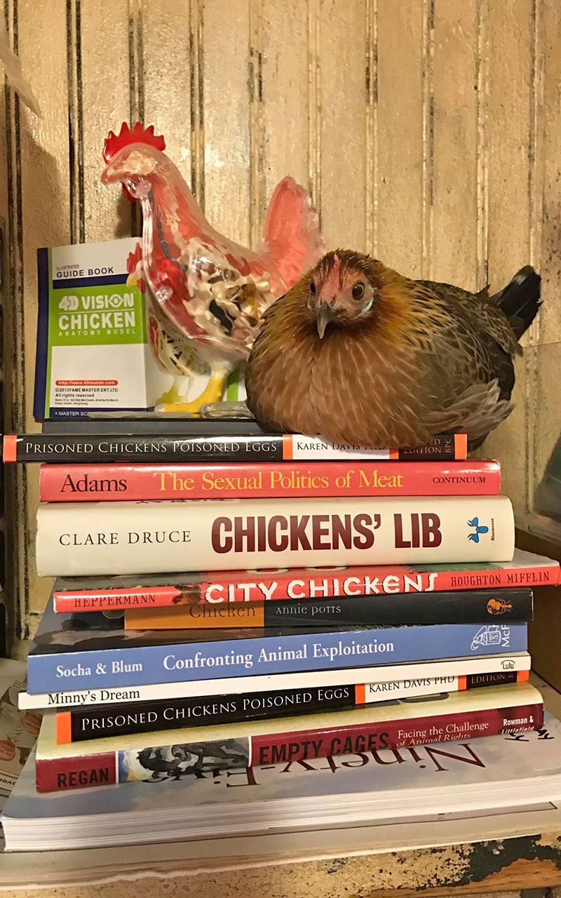 Zazu sitting on a stack of books about chickens