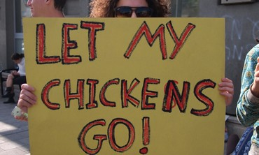 Protesters sign: Let my chickens go!