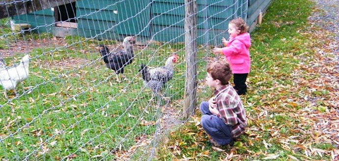 Children visiting chickens