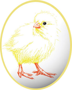 chick in egg