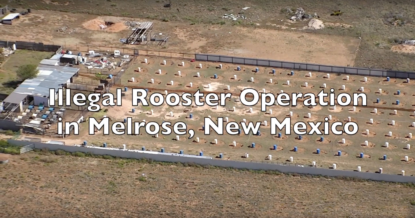 Aerial photo of illegal rooster operation