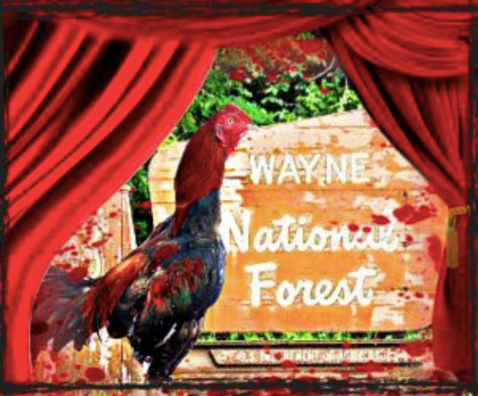 Collage with bloodied rooster in front of Wayne National Forest sign