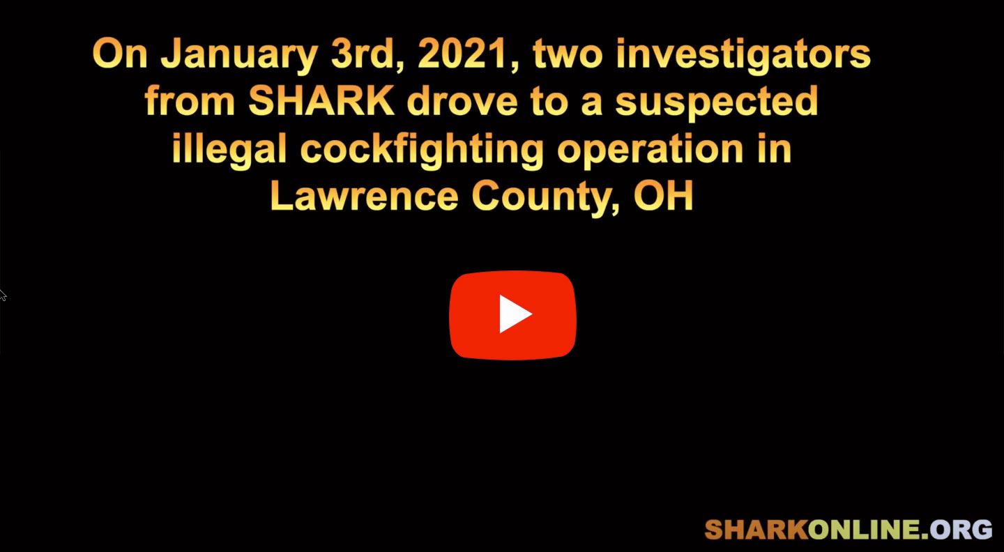 Image with YouTube play button and message: On January 3rd, 2021,      two investigators from SHARK drove to a suspected illegal cockfighting      operation in Lawrence County, OH.