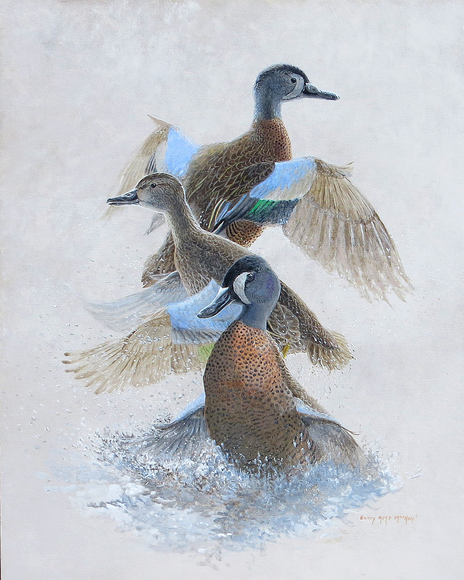 Painting of Blue-winged Teal