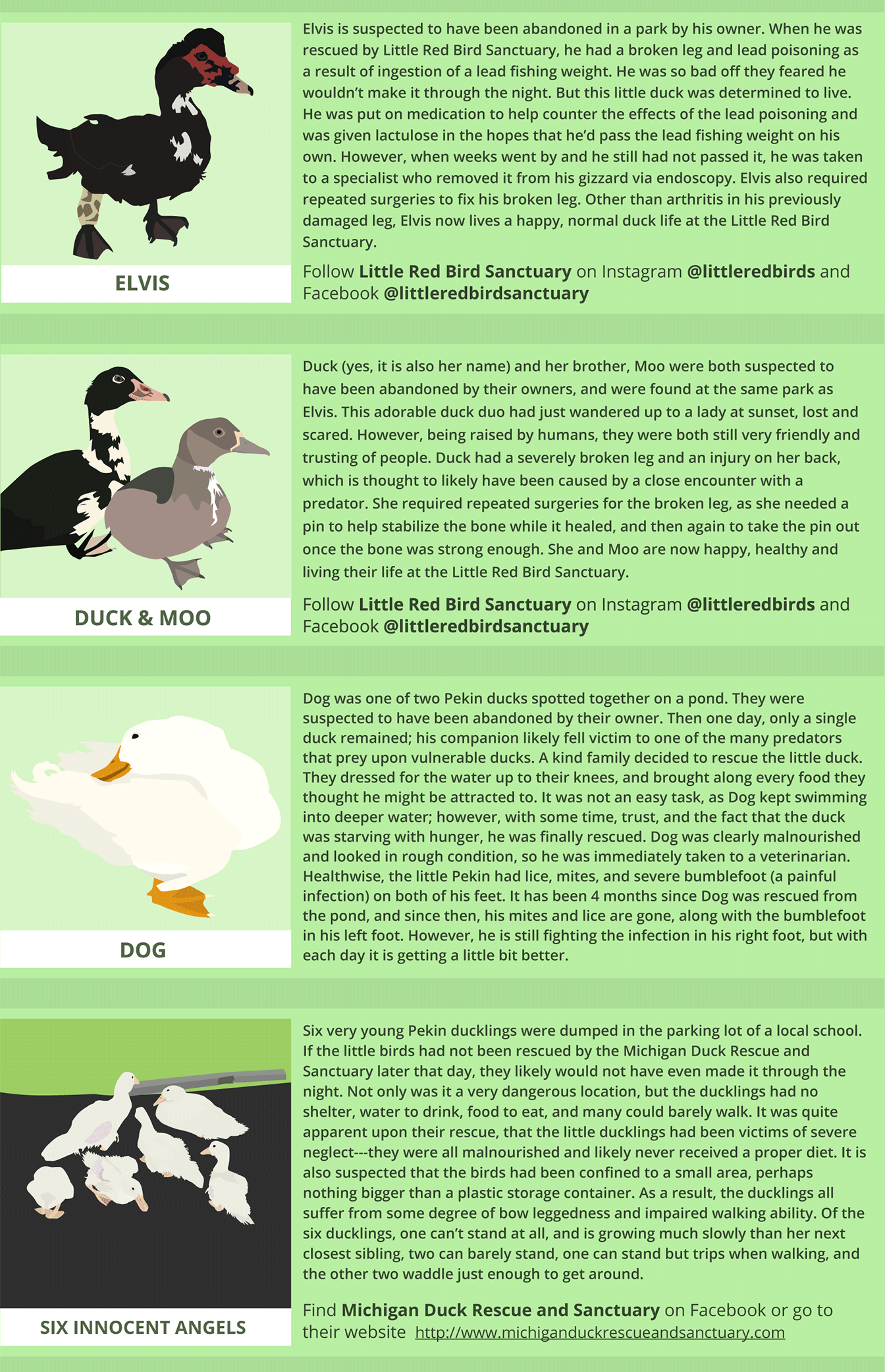 Ducklings are not Easter toys infographic