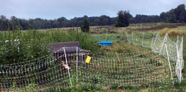 Antioch College chicken coop