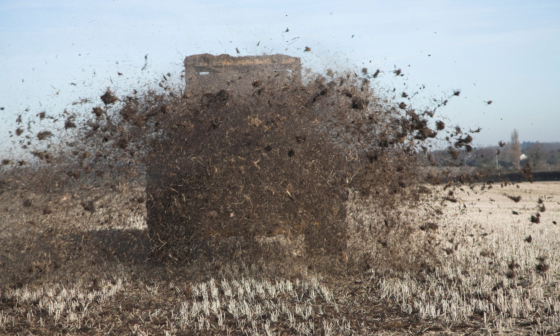 A tractor spreads muck over field of stubble. 'Most organic agriculture is focused on moo poo,' says 'veganic' farmer Will Bonsall.