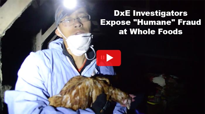 DxE Whole Foods investigation