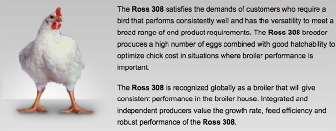 The Ross 308 broiler is now the most common breed in the US.