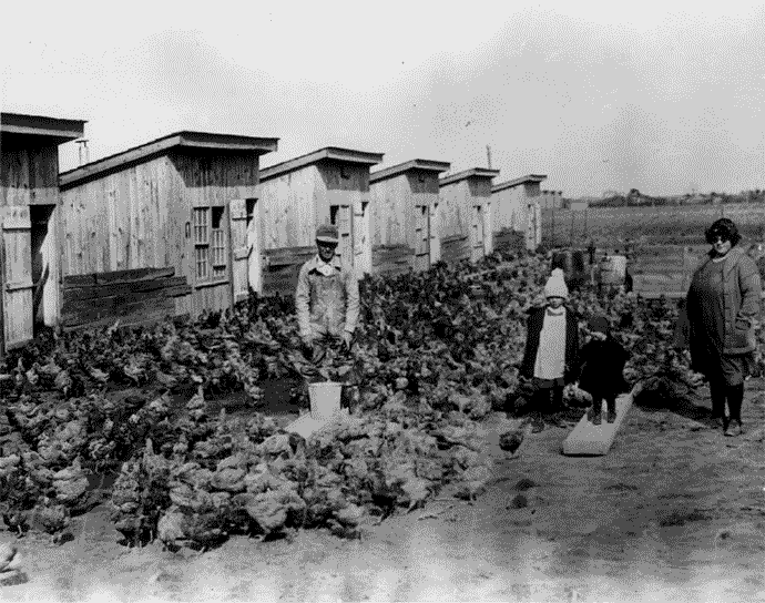 The Steele family with their broiler operation in 1924.