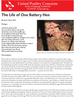 The Life of One Battery Hen