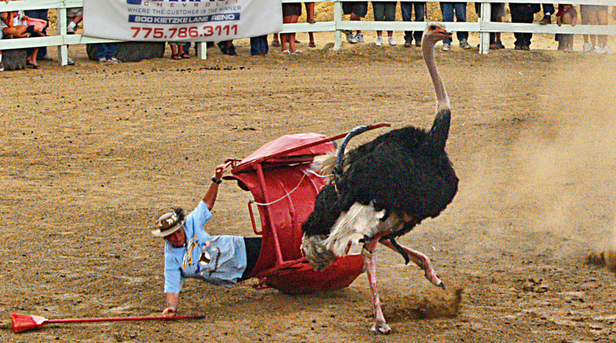 News Release Protesters Will Oppose Ostrich Races At 29th