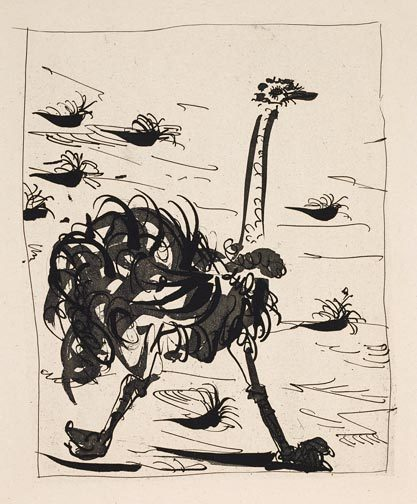 ostrich etching picasso