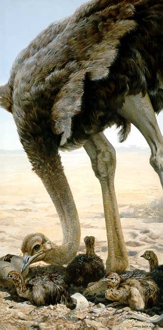 Mother ostrich tending to young by John Seerey-Lester