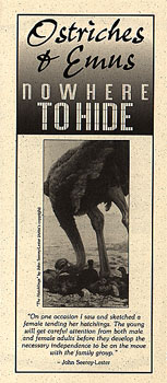 Brochure: Ostriches and Emus: Nowhere to Hide