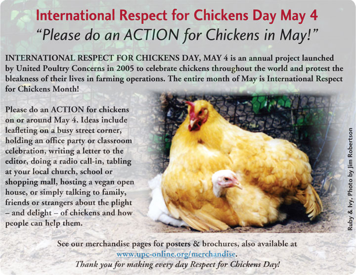 International Respect for Chickens Day May 4