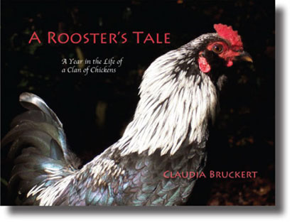 a rooster's tale