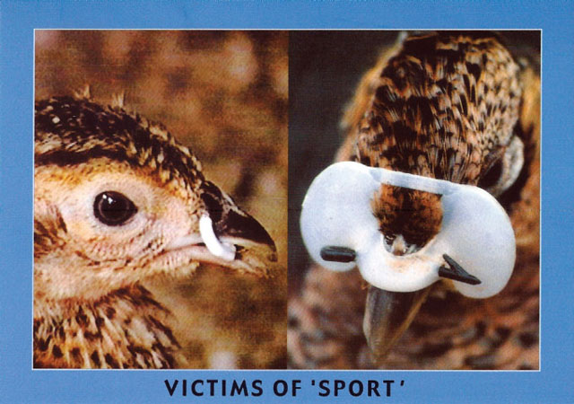 victims of sport