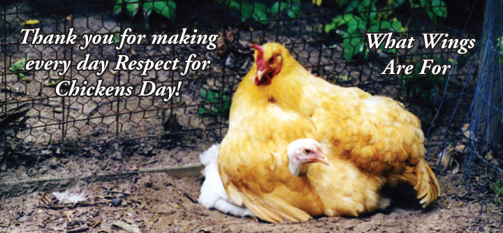 Thank You for making every day Respect for Chickens Day!