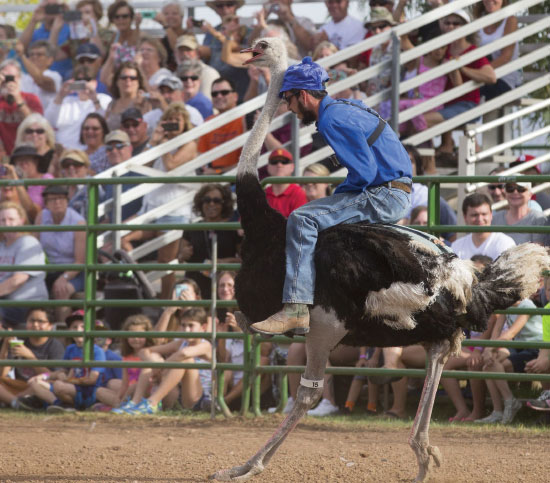 Man riding on the back of an ostrich