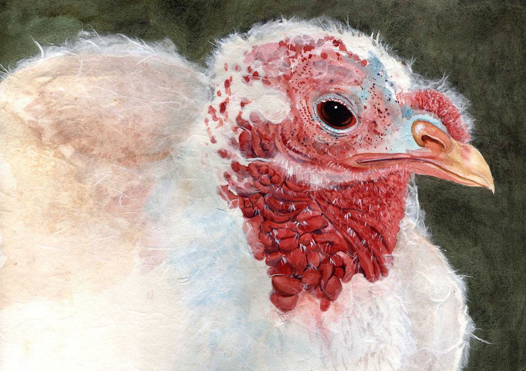 portrait of a turkey hen