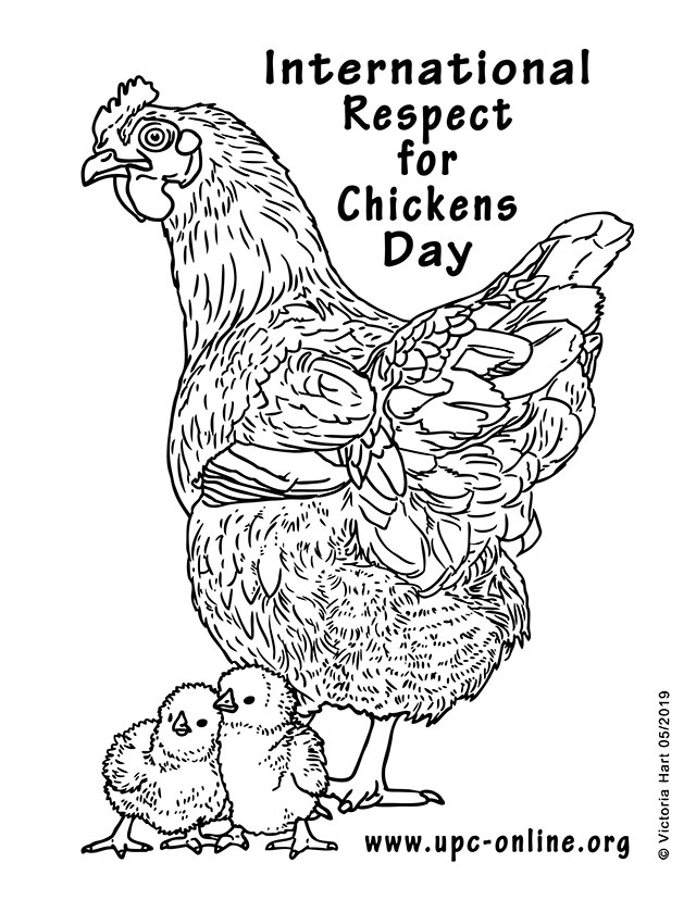 International Respect for Chickens Day Coloring Page