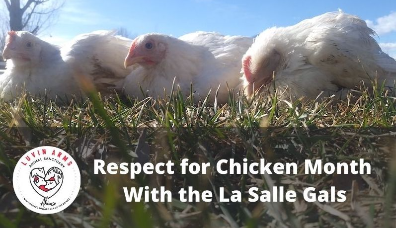 Hens sitting in the grass with msg: Respect for Chickens Month With LaSalle Gals