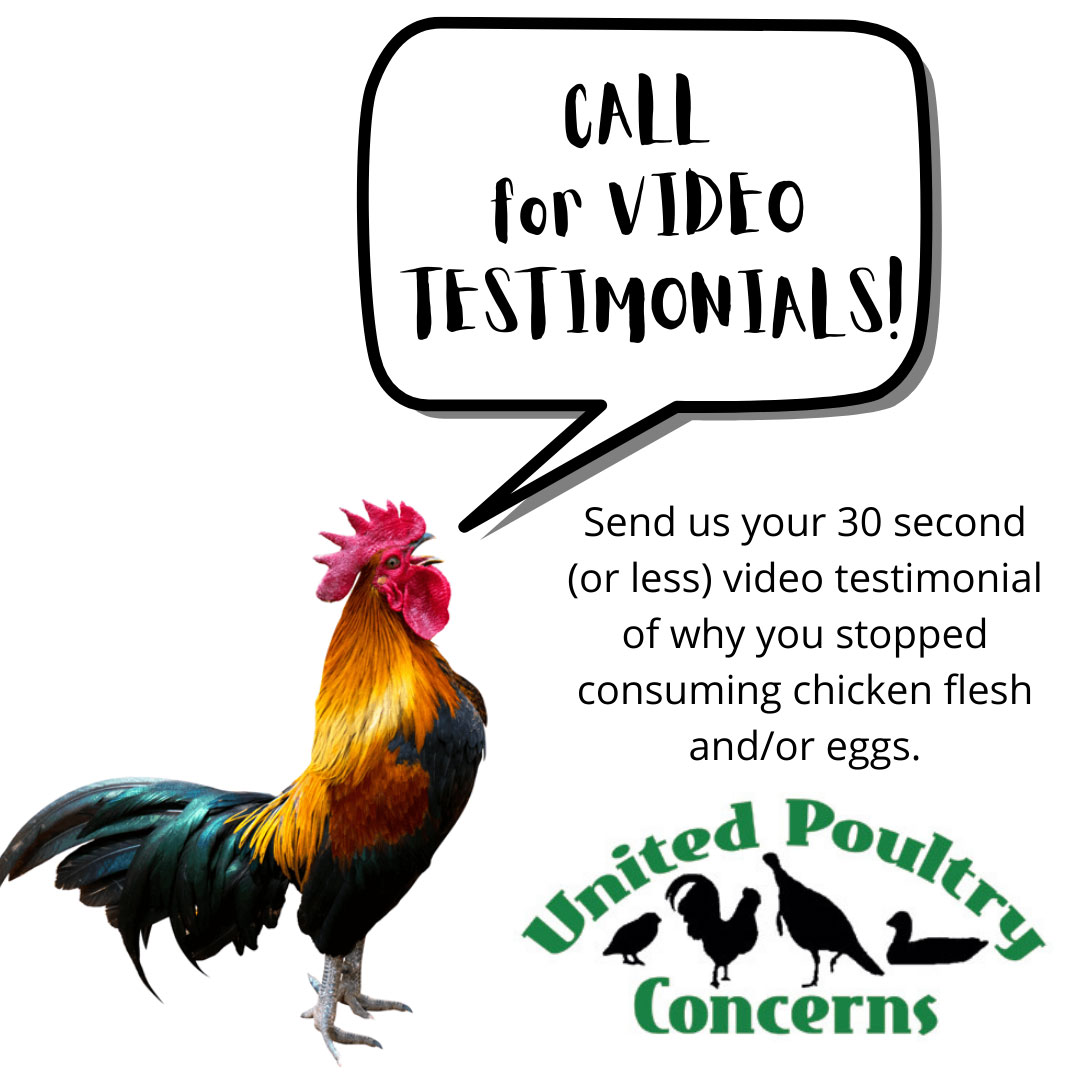 Rooster crowing 'call for video testimonials'