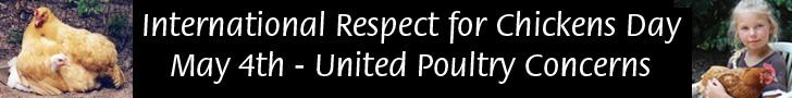 International Respect for Chickens banner