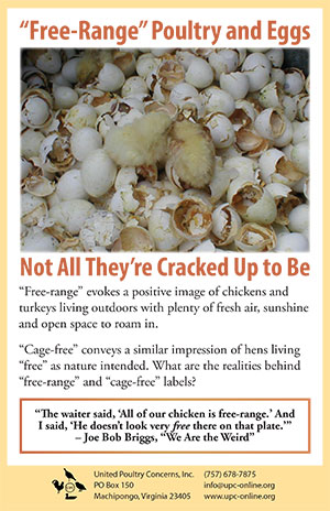 """Free-Range"" Poultry and Eggs: Not All They're Cracked Up ..."