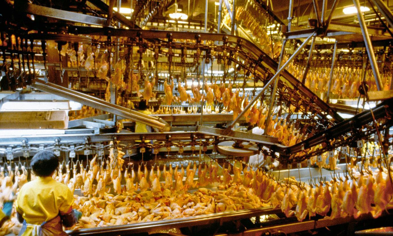 A chicken processing plant in Lewiston, North Carolina