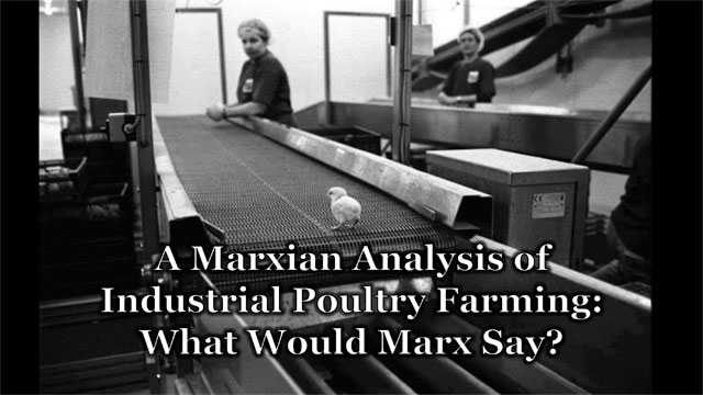 marxian analysis poultry farming