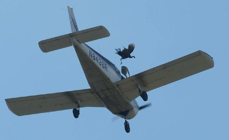 A live turkey is released saturday from a plane flying over crooked creek during the turkey trot festival in yellville