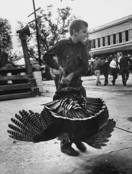 Small boy carrying a larger turkey