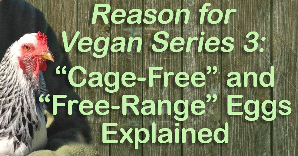 Cage-Free and Free-Range Eggs Explained