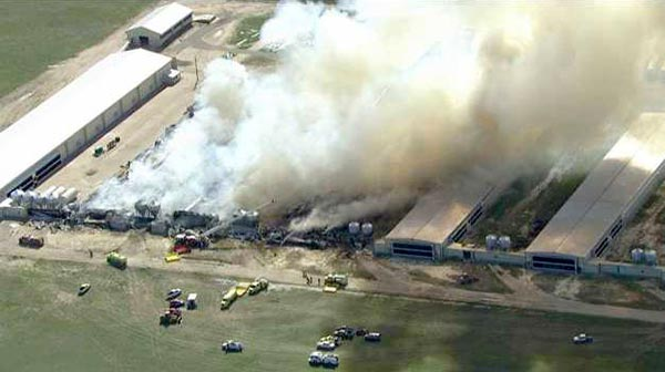 egg farm fire