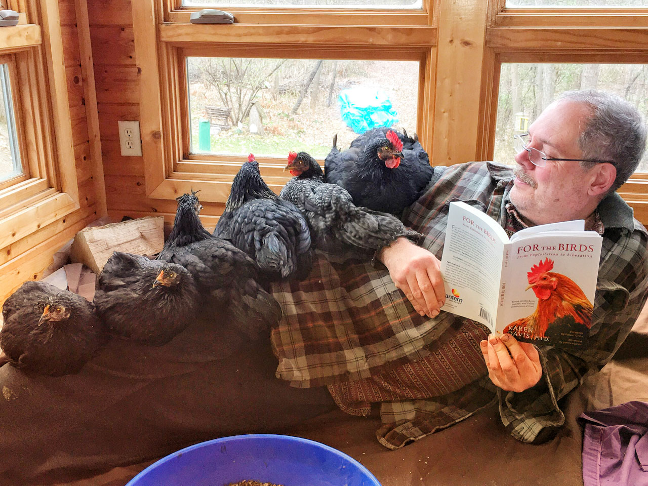 Bob McGrath laying on the floor with six hens perched on him