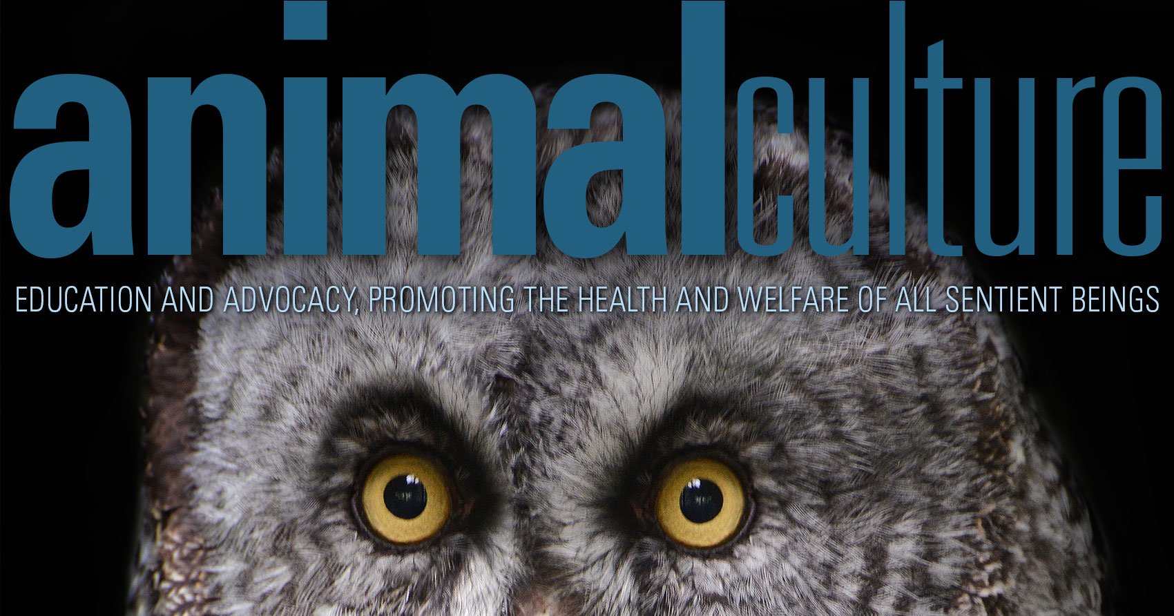 Owl on the cover of Animal Culture Magazine