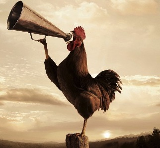 Rooster crowing with megaphone